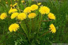 Flowers, Plants, Jar, Plant, Royal Icing Flowers, Flower, Florals, Jars, Floral