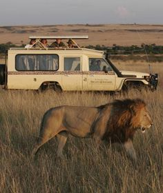 African Safari honeymoon, how cool would that be?