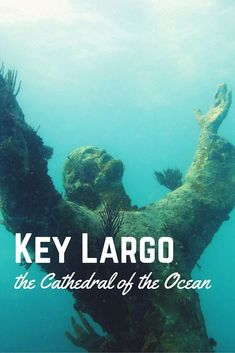 Scuba diving in Key Largo, the Cathedral of the Ocean - Florida Keys, USA - Video by World Adventure Divers #scubadivingdestinations #scubadivingvacations