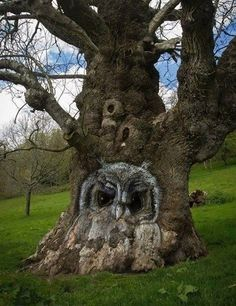 This tree is awesome. Someone carved the tree and owls live here. All Nature, Nature Tree, Amazing Nature, Amazing Art, Owl Tree, Tree Art, Weird Trees, Tree Faces, Unique Trees