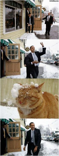 I like Obama and cats, but this just made me laugh. Funny Images, Funny Pictures, Presidente Obama, Barack Obama Family, Stupid Cat, Hate Cats, My Guy, The Funny, Funny Farm