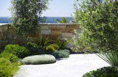 Landscape Design Coogee | Secret Gardens of Sydney: plantings to soften walls and fences