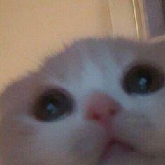 Cute Baby Cats, Cute Little Animals, Cute Funny Animals, Kittens Cutest, Cats And Kittens, Funny Cats, Cute Babies, Sad Cat, Cute Cat Wallpaper
