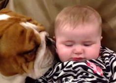 VIDEO: Ultimate Bulldog Compilation 2013...