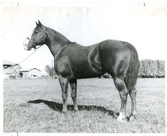 """His name was Texas Dandy, and he was an early crusader for Quarter Horse popularity on the race track, in the breeding world and even in Hollywood. He stared in the 1950 film, """"Boy From India."""" Texas Dandy was inducted into the Hall of Fame in 1994. Learn more about the AQHA Hall of Fame inductees at http://aqha.com/en/Foundation/Museum/Hall-of-Fame/Hall-of-Fame-Inductees.aspx"""