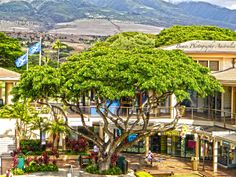 Whalers Village Maui, Hawaii. LOVE THIS PLACEEEE!!!!!!!!!!!!!!!