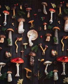 Voice of Nature — angelika_sorkina Forest Mushroom Fungi, Graphic, Art Inspo, Whimsical, Art Photography, Stuffed Mushrooms, Artsy, Inspiration, Halloween