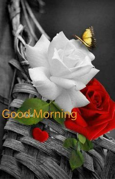 Good Morning Greetings Morning Rose, Happy Morning, Good Morning Flowers, Good Morning Good Night, Good Morning Wishes, Happy Sunday, Sunday Morning, Good Morning Inspirational Quotes, Good Morning Quotes