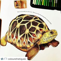 Millie Marotta coloridos (@milliemarottabooks) | Instagram photos and videos