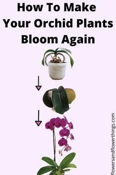 Indoor Orchids, Orchids Garden, Garden Plants, Flowering House Plants, Flower Gardening, Cactus Plants, Gardening Tips, Orchid Plant Care, Indoor Orchid Care
