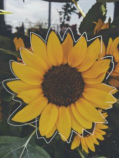 aesthetic wallpapers sunflower - Yahoo Image Search Results - Apocalypse Now And Then Aesthetic Iphone Wallpaper, Aesthetic Wallpapers, Aesthetic Backgrounds, Phone Backgrounds, Wallpaper Backgrounds, Lock Screen Backgrounds, Screen Wallpaper, Image Tumblr, Plant Aesthetic
