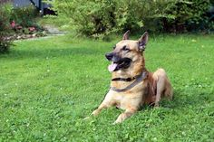 Are Electric Invisible Fences Really A Good Dog Training Tool? | Jerky Dog