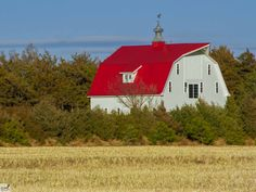 Large white barn with bright red roof  surrounded by trees and a large wheat field. To purchase visit:  www.cookiecardsonline.com
