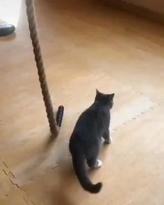 Cat was in the army before retirement - funny animals - Kitty kit Funny Cute Cats, Cute Cats And Kittens, Cute Funny Animals, Funny Animal Videos, Funny Animal Pictures, Funny Videos, Animal Pics, Army Cats, Cat Playground