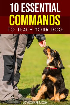 10 Essential Commands to Teach Your Dog - Love Of A Pet Dog Training Techniques, Dog Training Videos, Best Dog Training, Brain Training, Dog Commands, Dog School, Easiest Dogs To Train, Dog List, Guide Dog