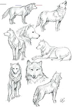Wolves of Transylvania draw Wolf coloring … The post Wolves of Transylvania draw Wolf coloring … appeared first on Woman Casual - Drawing Ideas Drawing Poses, Drawing Tips, Drawing Reference, Drawing Sketches, Drawing Ideas, Drawing Drawing, Anime Wolf Drawing, Wolf Drawing Easy, Tattoo Design Drawings