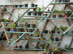 Plants pots on reclaimed wood shelves