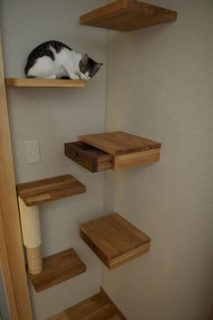 Cat Shelf by maggie