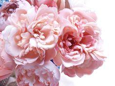 paeonia suffruticosa | Flickr - Photo Sharing!