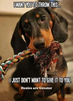 So true lol                                                                                                                                                                                 More #dachshund