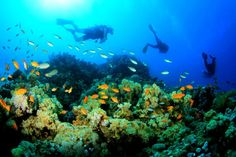 diving travel