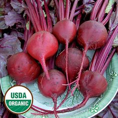 Unsual rare AMERICAN Heritage heirloom RUBY RED  ONION seeds  Allium Cepa
