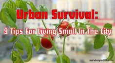 Urban Survival: 9 Tips For Living Small In The City