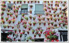 Wow! What a lot of pots!  Cordoba Patio Festival. Photo by Luis Garcia Marin