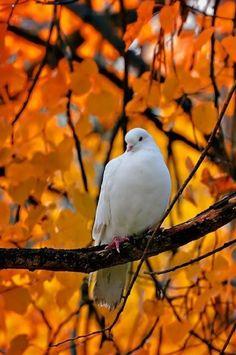 Dove bird photography peace New Ideas Pretty Birds, Beautiful Birds, Animals Beautiful, Cute Animals, Beautiful Nature Pictures, Wild Animals, Simply Beautiful, Dove Bird, All Nature
