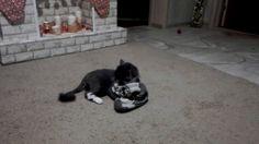 Кот Федор сражается с носком!
