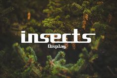 insects font from FontBundles.net