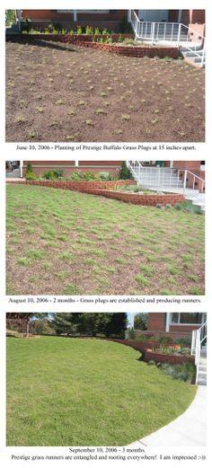 Prestige Buffalo Grass
