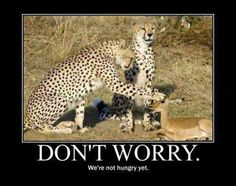 Demotivational Poster - Don't Worry, we're not hungry yet.
