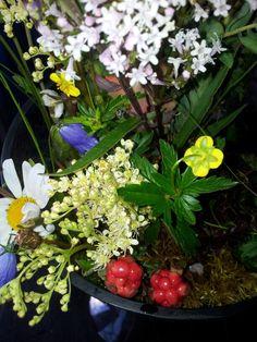 Flowers - including cloud berries, bluebells and daisies - picked at 1100 meters in Jotunheimen,  Norway.
