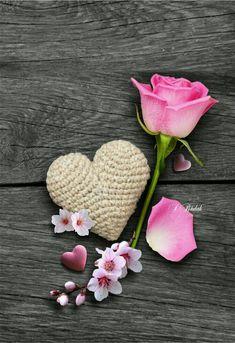 coeur et rose / heart and rose Heart Images, Love Images, Heart Wallpaper, Love Wallpaper, Hearts And Roses, Rosa Rose, I Love Heart, Flower Backgrounds, Heart Art