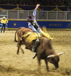 105 Best 8 Seconds Images Bull Riding Bull Riders