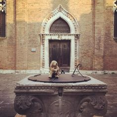 It's raining today in Venice.  That light shade of grey adds another touch of Melancholia. Nonetheless the city is strikingly beautiful. #venezia #venice #cafoscari #fluffy #plushie #stuffedanimal #welpe #puppy #fluffydog #fff #plushiesofinsta  #coldbutsunny #oneofthemostbeautifulplaces #lovelaughlobilat #lobilattravels #lobilataufreisen
