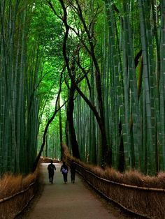 Bamboo...talk about privacy, I'm considering lining our perimeter of our back yard & planting bamboo in containers...
