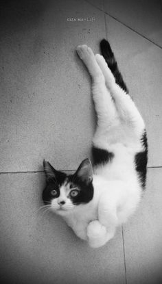 Even cats do this! Its gotta be an important role in life..well atleast it is in my life. Gymnastics + My life= BEST LIFE EVER!