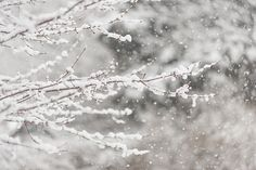 First Day of Spring 2015 New Jersey by Terry DeLuco Spring Snow, Spring 2015, First Day Of Spring, New Jersey, Fine Art Prints, America, Winter, Photography, Winter Time