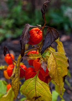 Entdecke Herbstfarben im Spreewald