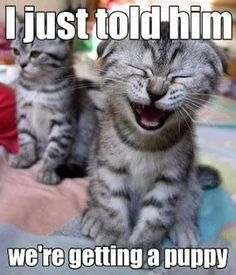 Top 40 Funny animal picture quotes #humor pic