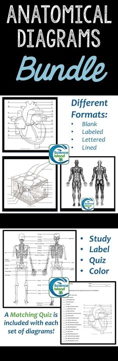 Anatomical Diagrams for each major body system PLUS editable quizzes!