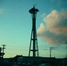 By late November 1961, the Space Needle has taken on its overall shape, though work continues. Photo: George Gulacsik/Seattle Public Library / 2016 Seattle Public Library