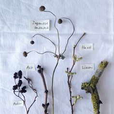 silverpebble: Making winter: preserving and foraging plants for handmade decorations