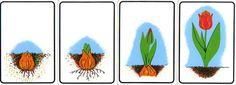 Użyj STRZAŁEK na KLAWIATURZE do przełączania zdjeć Spring Activities, Activities For Kids, Diy Crafts For Gifts, Crafts For Kids, Paper Flowers Craft, Teaching Science, Kids Education, Montessori, Planting Flowers