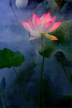 In dreams there is time to linger with lotus flowers and learn the songs they sing