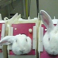 Petition | End animal testing for cosmetics in ASEAN by December 2015 | Change.org Please sign and share this petition!