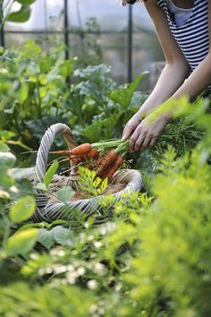 Katie works in the kitchen at the B&B she loves to play in the garden picking fresh veggies to top off a meal.