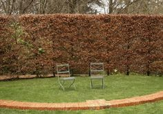 GardenDrum Cloudehill garden, beech hedge in autumn Vic, Aust